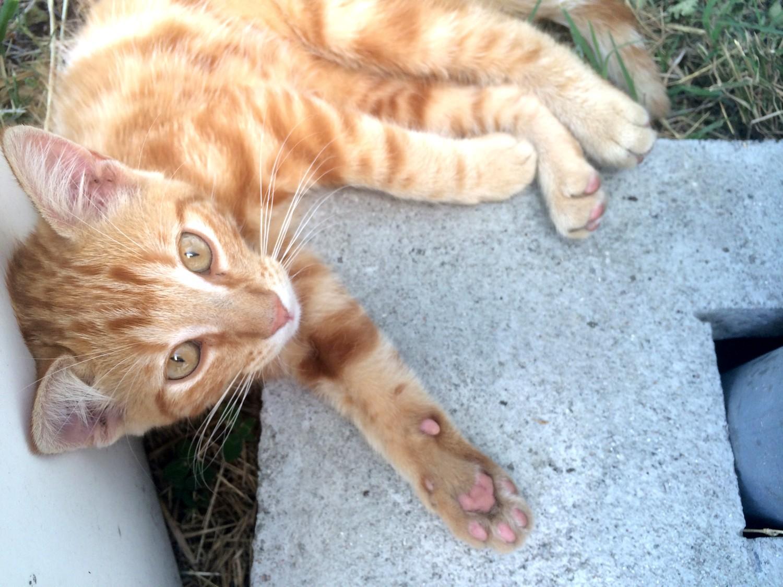 SOS bébé chat recherche famille dutalonaucrampon blog voyage corse 02