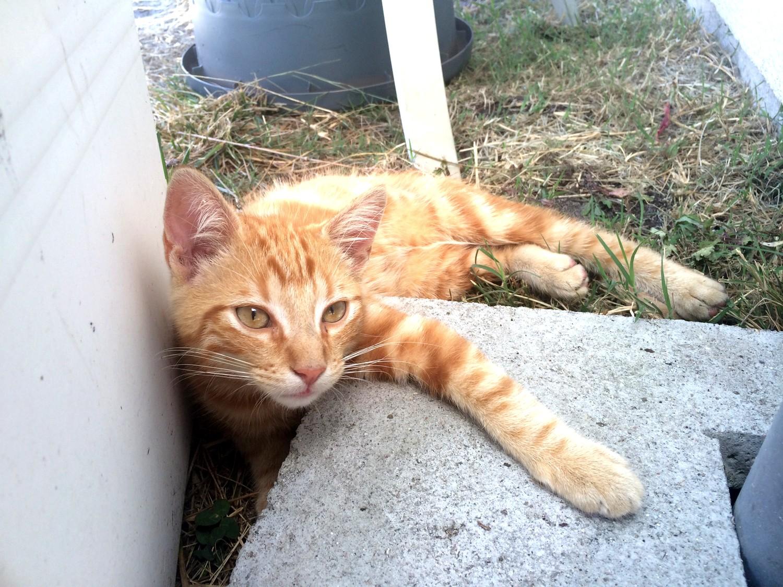 SOS bébé chat recherche famille dutalonaucrampon blog voyage corse 03