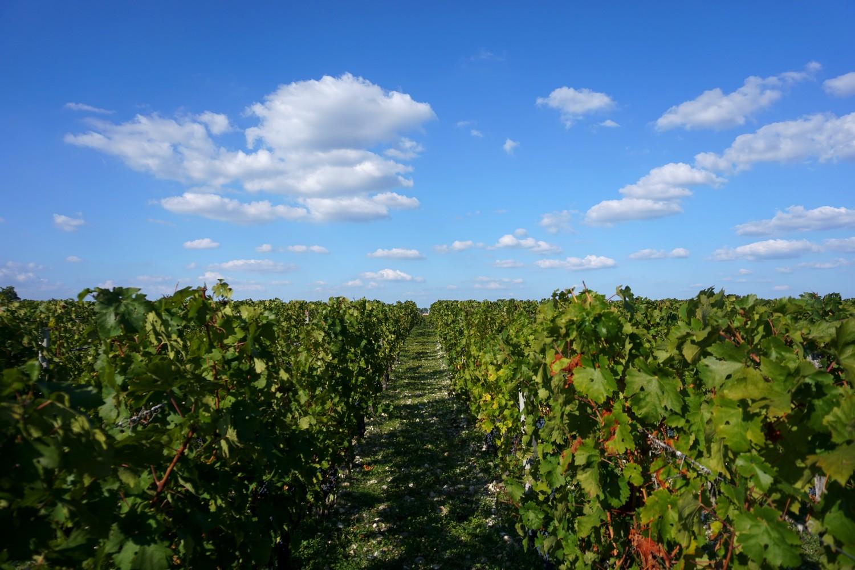 chateau-dagassac-route-des-vins-bordeaux-gironde-blog-aquitaine-voyage-tourisme-bonnes-adresse-03