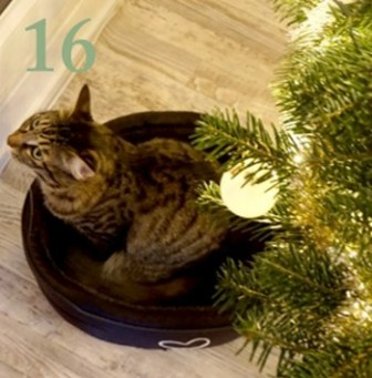 calendrier-de-lavent-2016-blog-bordeaux-noel-video-youtube-16