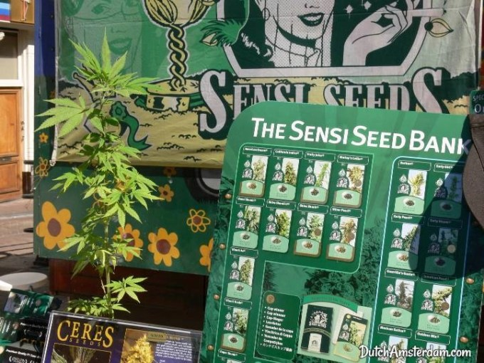 Cannabis seeds store, Amsterdam