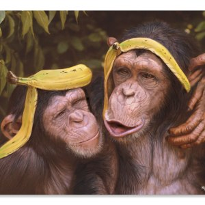 Cheeky Chimps
