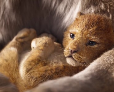 Simba - The Lion King 2019