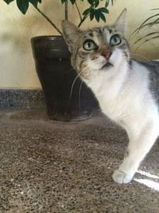 Cat Peek-A-Boo