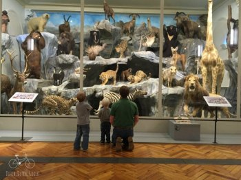 Lille Natural History Museum