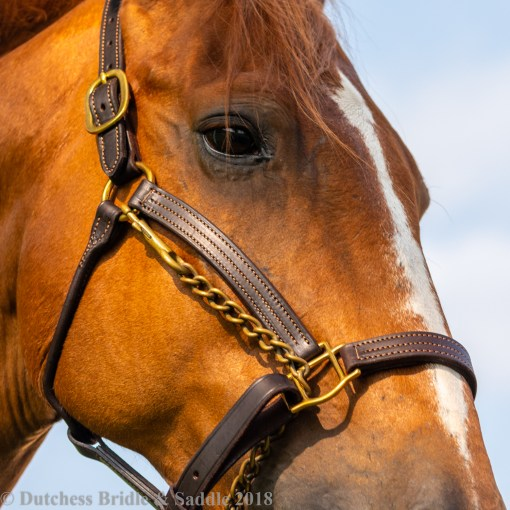 FinnTack American Quality Leather Halter on a chestnut horse