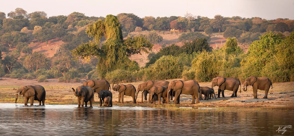 Safari in Chobe Nationaal Park