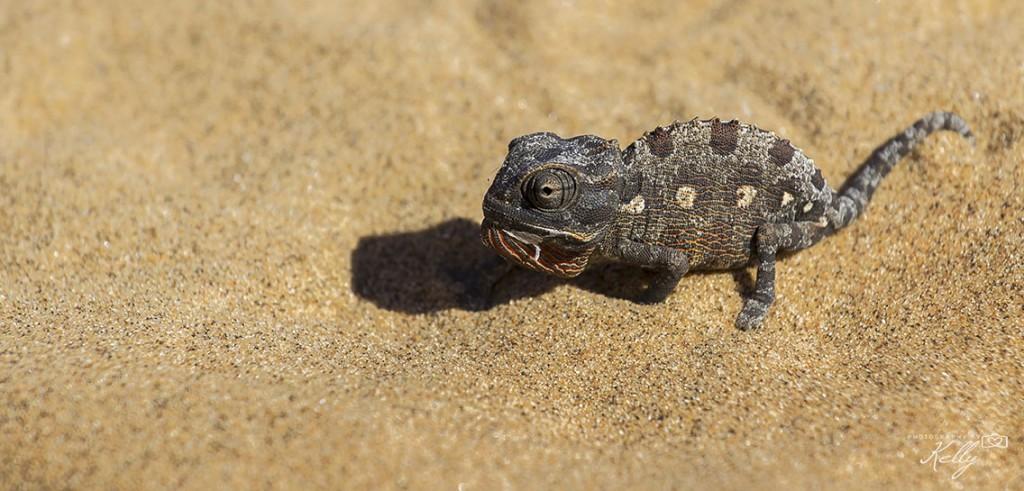 Swakopmund, Namibië
