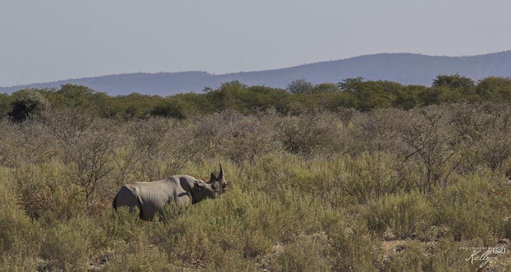 neushoorn Etosha National Park