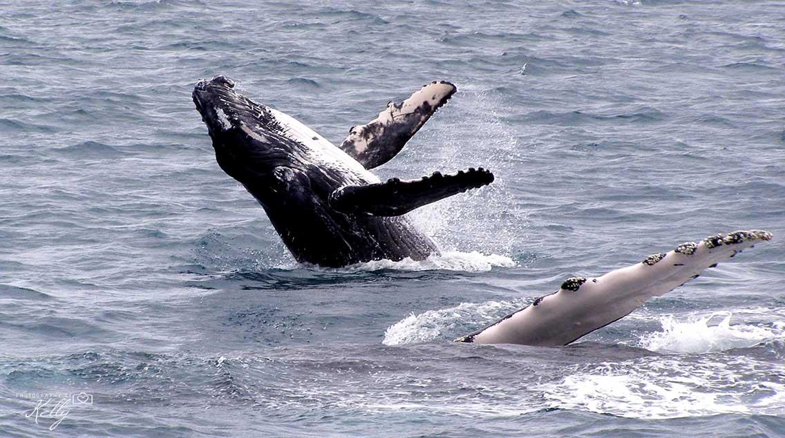 Walvissen spotten in Australië