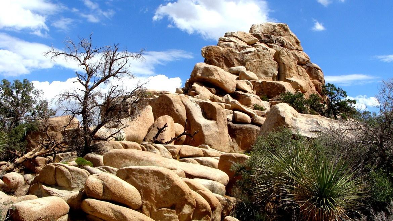 Joshua Tree, USA