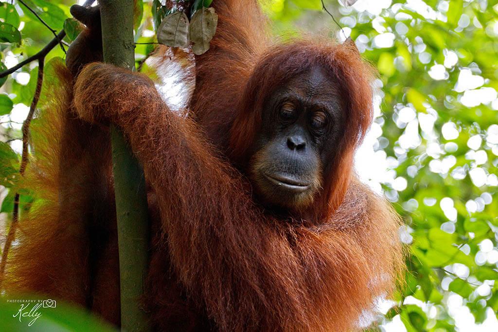 Hoogtepunten van Sumatra