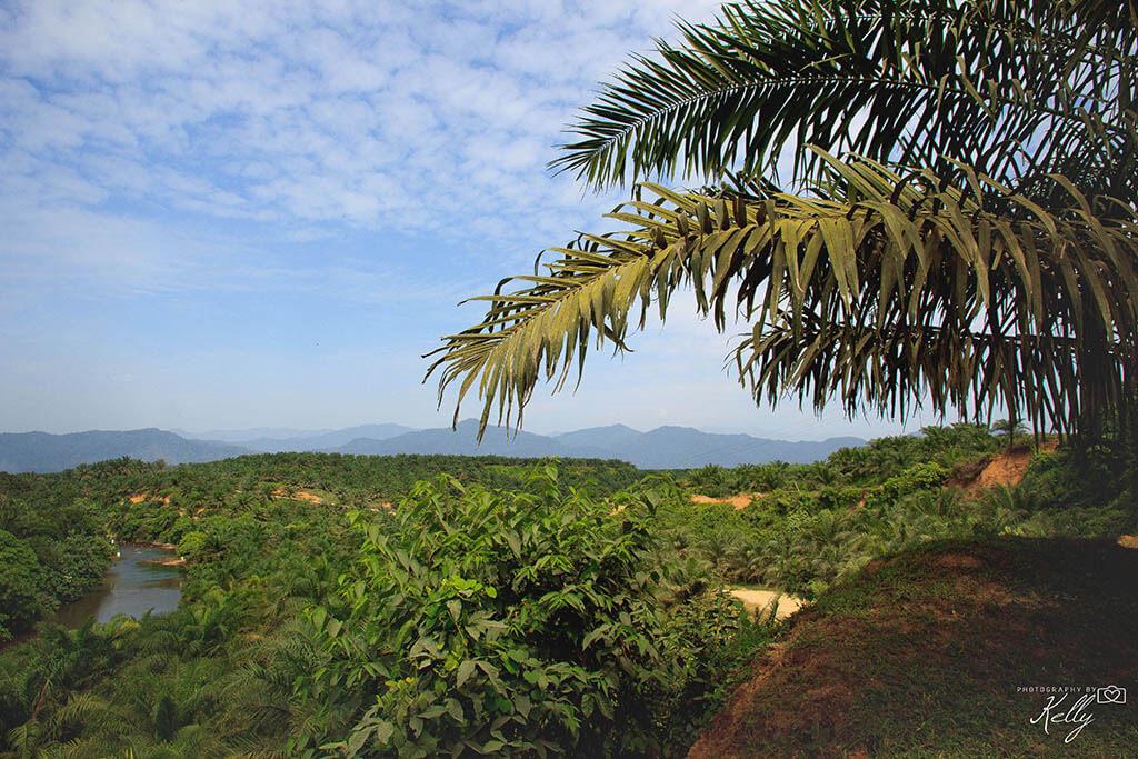 Bukit Lawang; op zoek naar orang-oetans