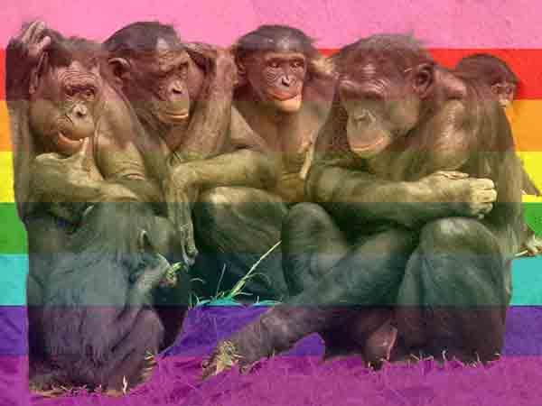 Alle homoseksuele dieren op een rij