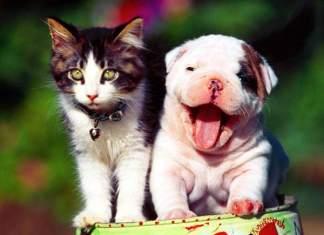 Honden hebben ons nodig, katten niet