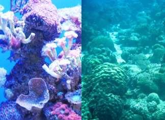 Koraalrif wordt zwaar bedreigd volgens onderzoekers Nature