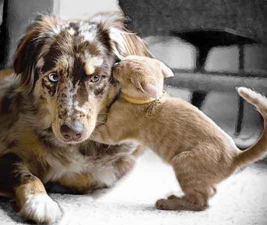 Waarom houden mensen van dieren en anderen niet?