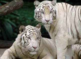 Mooiste dierentuinen ter wereld - de top 10