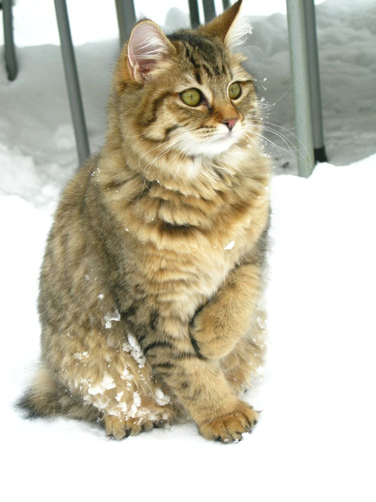 Pippa december 2009