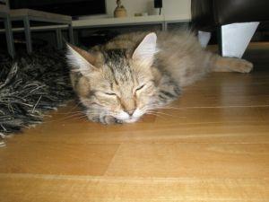 Juno vindt alles best en slaapt het liefst op het parket!