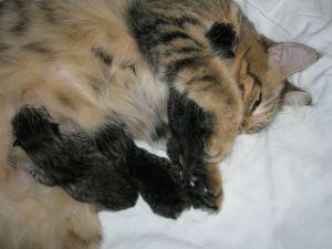 Juno en Kittens 17-11-08