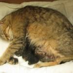Pippa en de 4 kittens