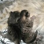 Kittens 15-10-10