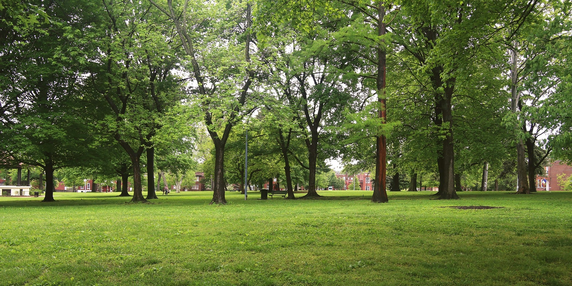 Green grass and leaves in Gravois Park. Photo by Paul Sableman.