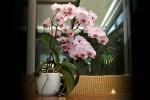Een nieuw businessmodel voor een circulaire orchidee, waarom eigenlijk?