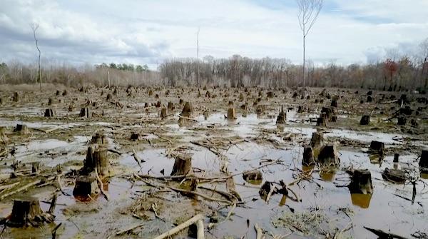 zembla biomassa boskap
