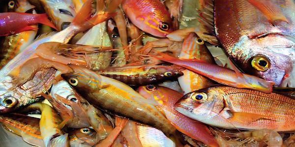 vissen bijvangst certificering