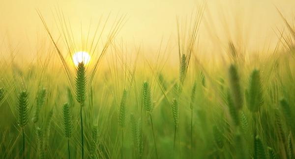 bodem microben landbouw