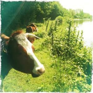 Unicorn Lente.