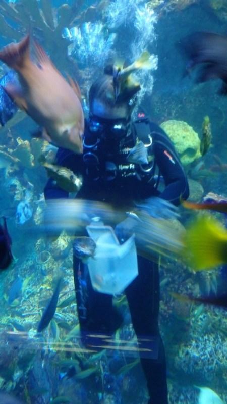 aquarium boston