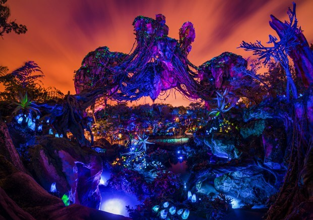 Animal Kingdom Disney photograph at night