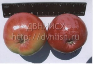 Яблоня Амурское урожайное