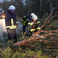 Friederike storm cleanup begins in Germany as trains resume