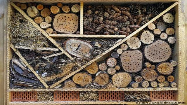 An insect hotel