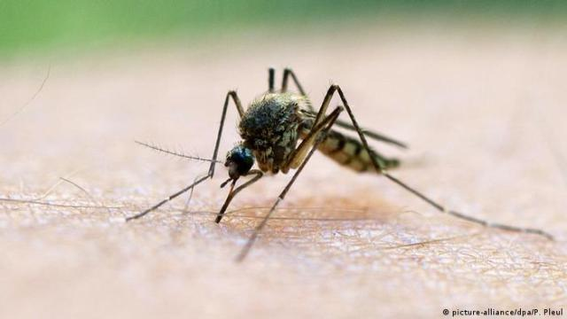 A mosquito stinging a human