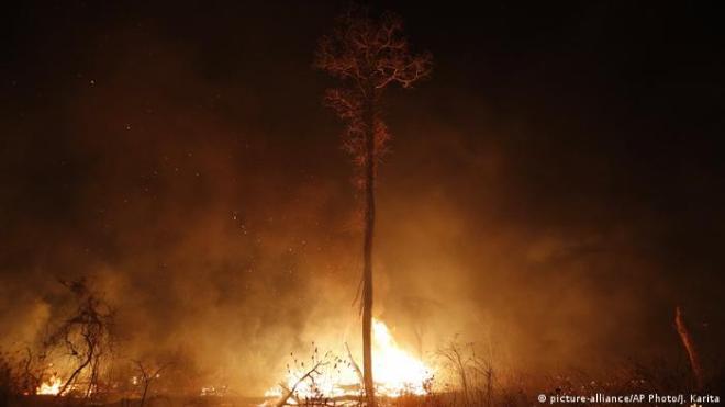 Bolivien Robore | Waldbrände | Chiquitania Wald (picture-alliance/AP Photo/J. Karita)