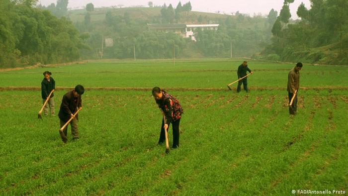 Family Farming China