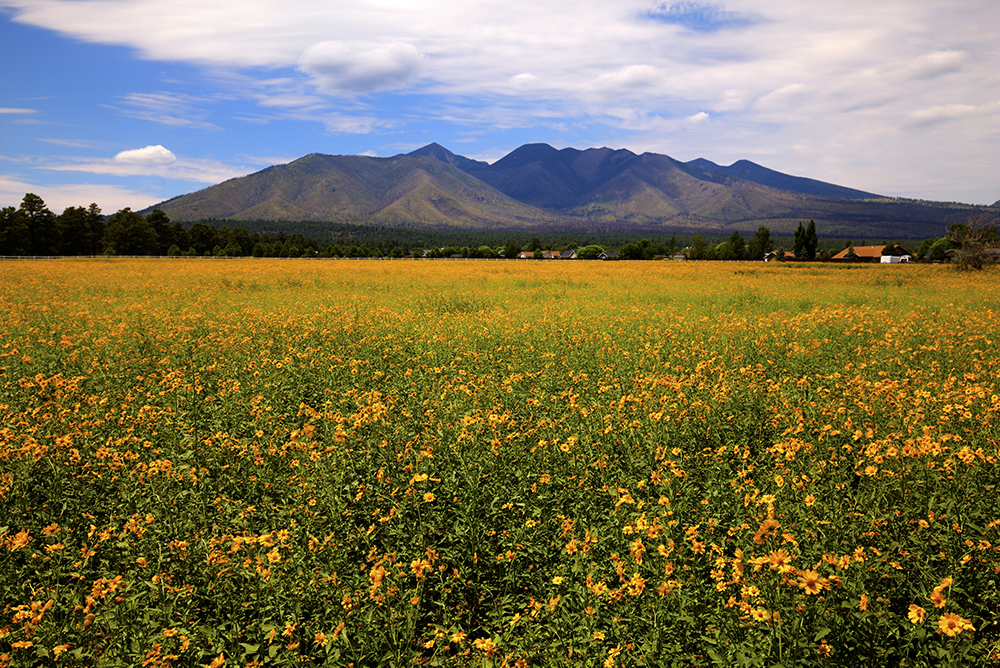 Field near my house.