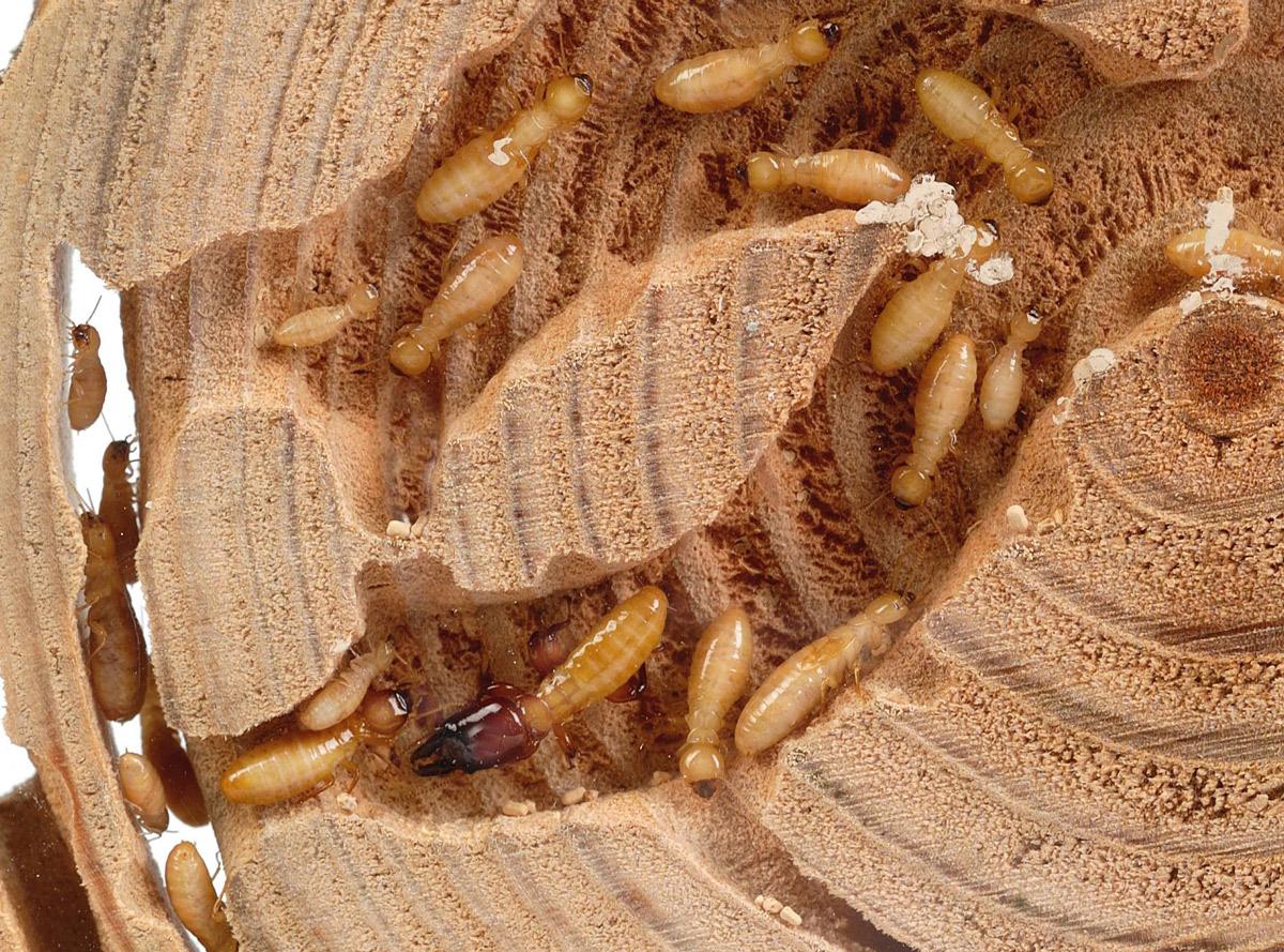 Termite Habitats