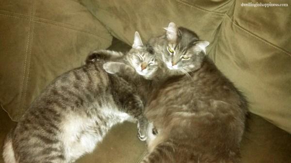 Luna and Weezer
