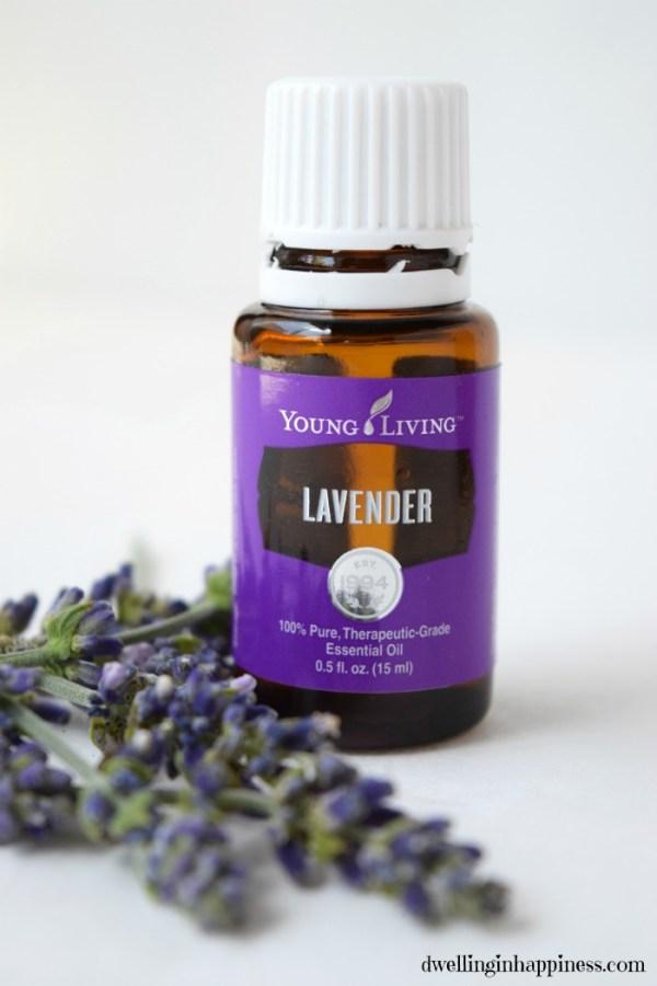 Lavender-closeup