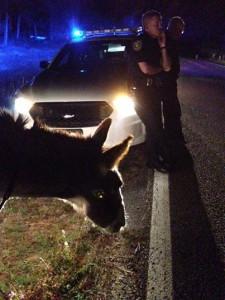 Outlaw donkey nabbed in Okaloosa Fl