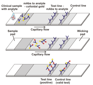 Lateral Flow Assay