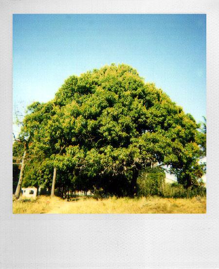 Polaroid 600, O filme - 009 - dxfoto
