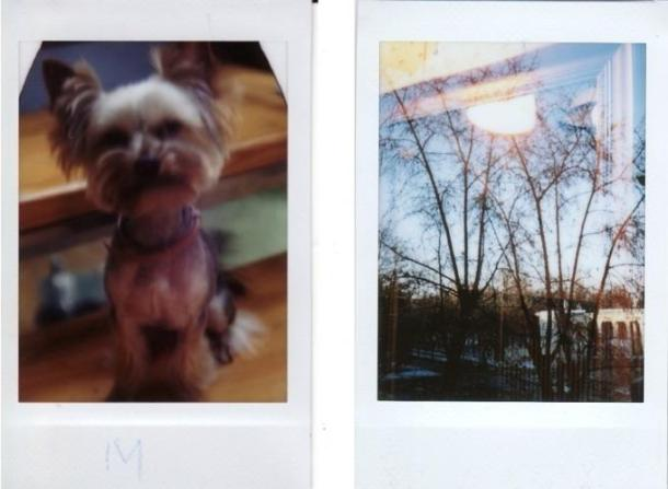Jollylook é uma câmera de fole instantânea de papel cartão 13 - DXFoto