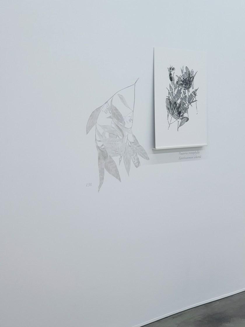 gabinete-de-dibujos-ernesto-casero-las-plantas-perdidas-07